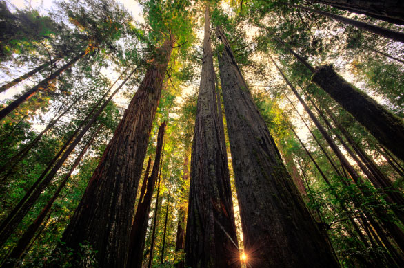 Taper: Building Efficiency - Expertise - Trusted Advisors - redwood trees